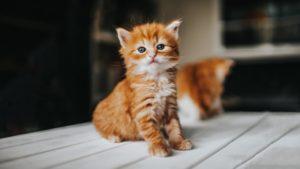 Jakie oryginalne imię dla kota można wybrać?