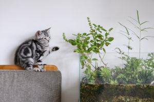 Masz kotka? Sprawdź, które to rośliny trujące dla kota i nie kupuj ich do swojego domu oraz ogrodu